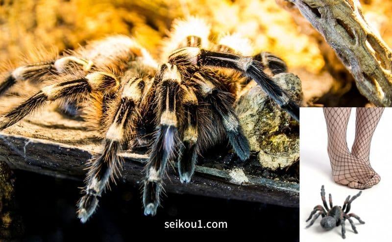 蜘蛛恐怖症-蜘蛛の恐怖を克服