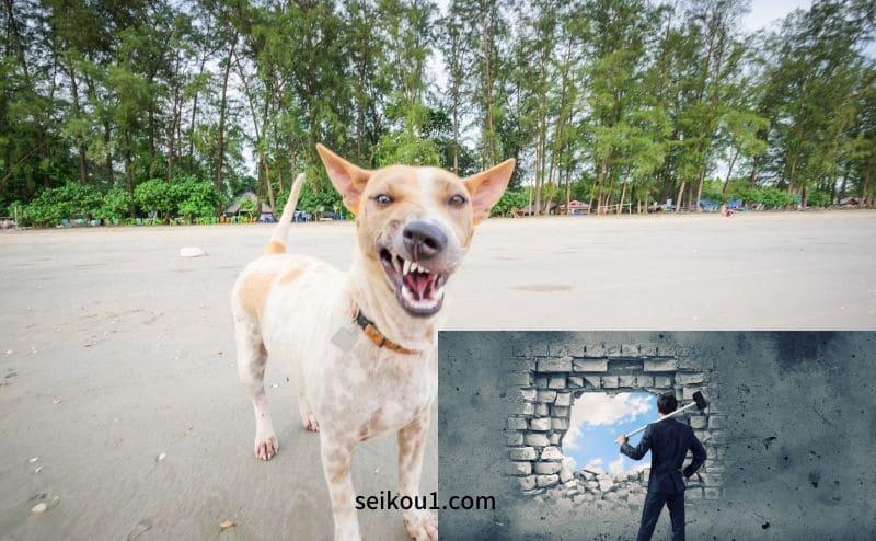 犬恐怖症を克服